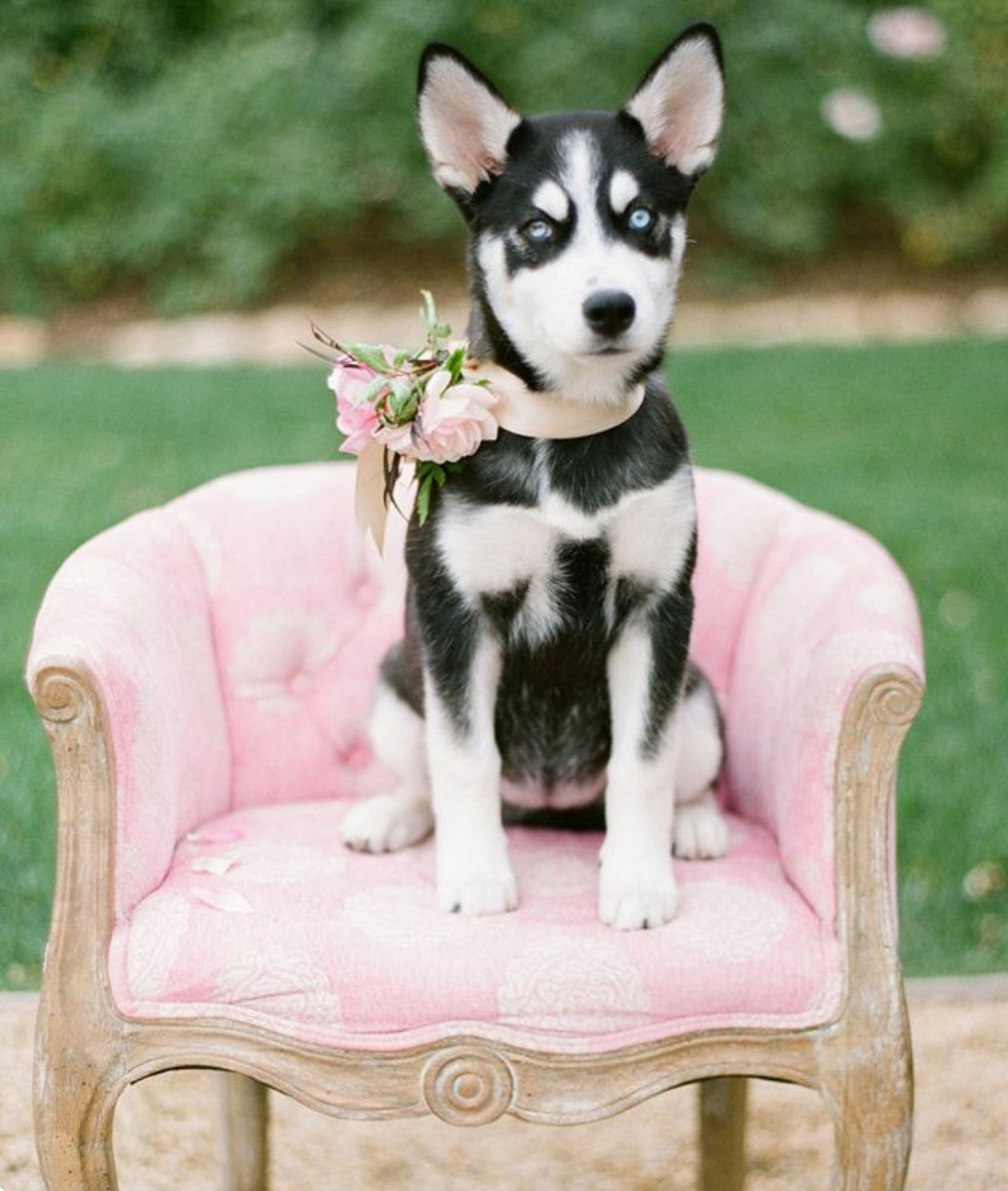 Mascotas De Boda Salón Des Fleurs Tienda Online