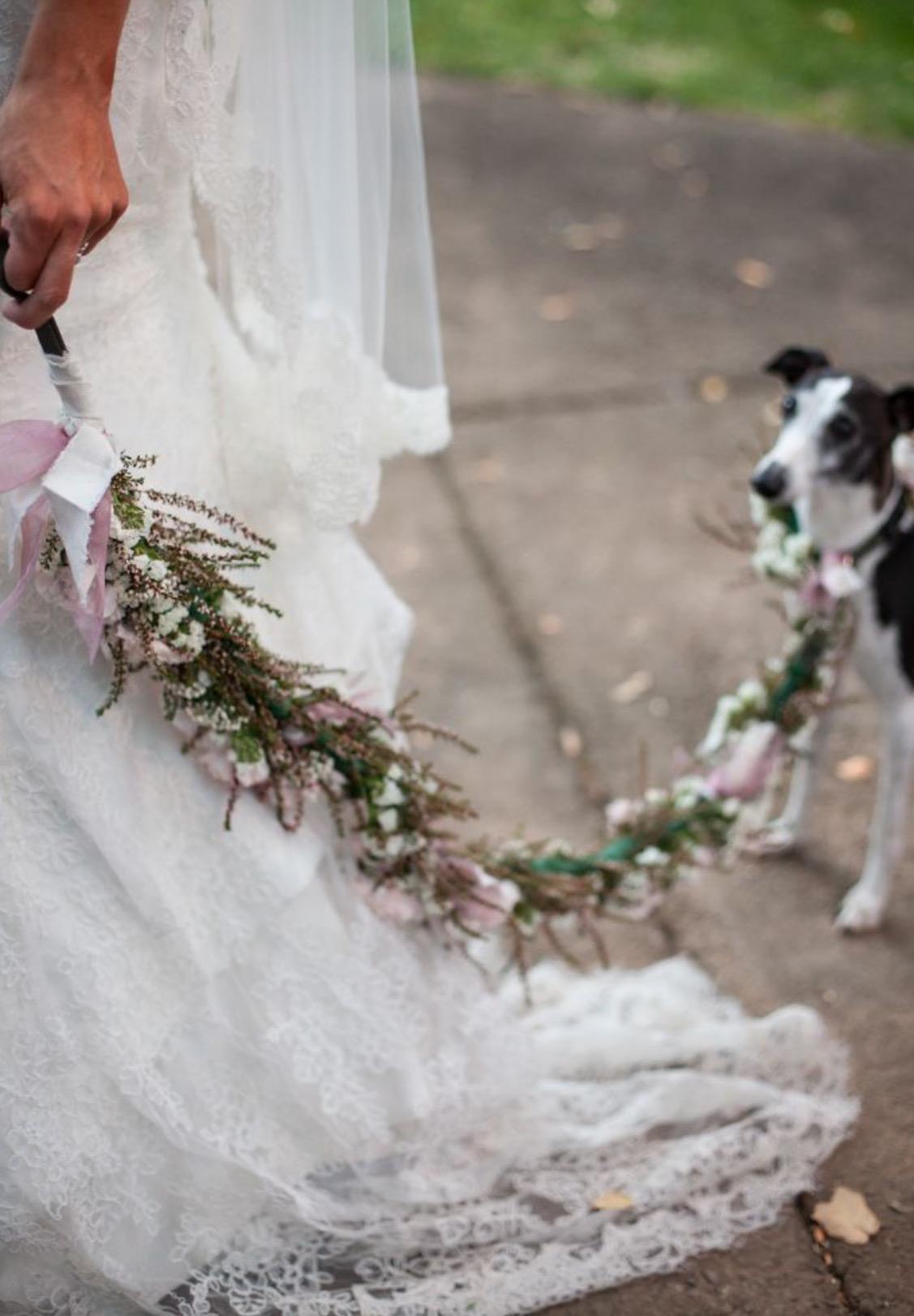 Perro boda correa