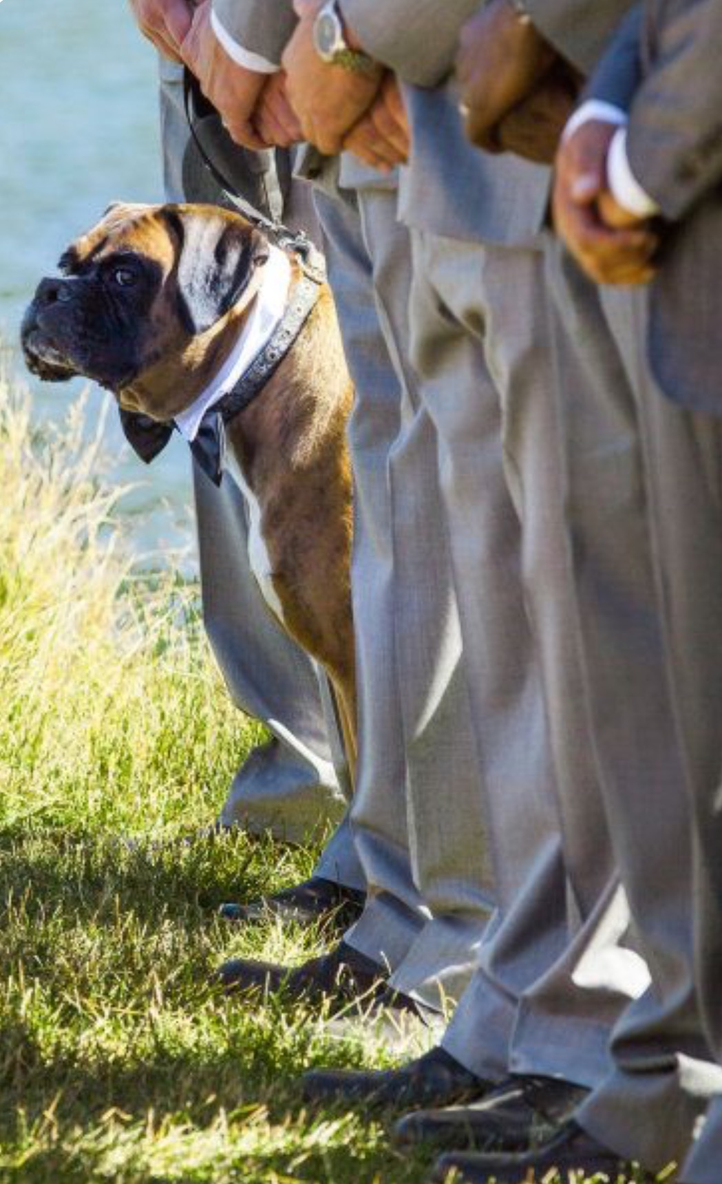Perro testigo boda