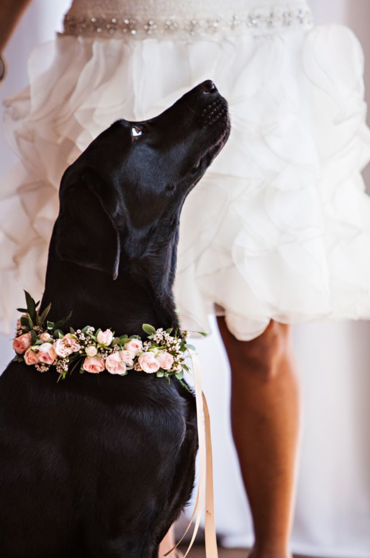 Perro boda